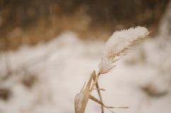 De winterzaden royalty-vrije stock foto's