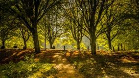 De winterzon op het recente groene gras van het de herfst boskanaal en bomen met donkere schaduwen in tegenover elkaar stellende  Stock Fotografie