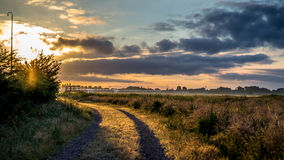 De winterzon op recent de herfst bruin dood gras Stock Foto's