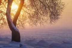 De winterzonlicht in avond bij zonsondergang door boomtakken Het landschap van de winter Gele zonneschijn Sneeuw en vorst op land royalty-vrije stock foto's