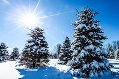 De winterzonneschijn Royalty-vrije Stock Foto's