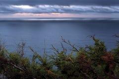 De winterzonsondergang in Grote Sur, met voorgrondgebladerte Stock Foto's