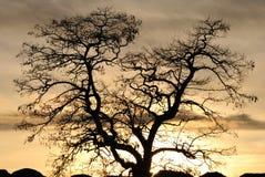 De de winterzonsondergang maakt donkere bomen stock fotografie