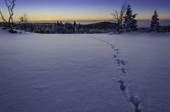 De winterzonsopgang Royalty-vrije Stock Foto