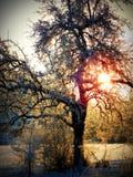 De winterzonsopgang Royalty-vrije Stock Foto's