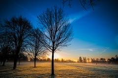 De winterzonsopgang bij een Park Stock Foto