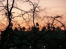 De winterzonsopgang en TV-Antennes Stock Fotografie