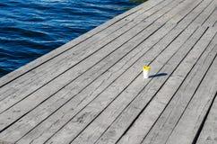 De Witboekkop met een geel plastic deksel bevindt zich op de raad op de kust van het meer royalty-vrije stock foto