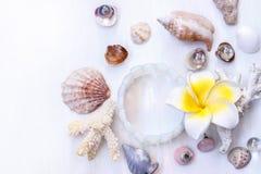 De witte achtergrond op het mariene thema met zeeschelpen, parels, koralen, oorringen, armband en een gele bloem Royalty-vrije Stock Afbeeldingen