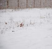 De witte achtergrond van de de wintersneeuw Stock Fotografie