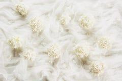 De witte achtergrond van textiel en witte bloemviburnum, guelder nam toe Textuur Stock Afbeeldingen