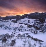 De witte berk forse afetr sneeuwt in de zonsondergang Royalty-vrije Stock Foto's