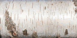 De witte berkeschors, sluit omhoog achtergrondtextuur Royalty-vrije Stock Afbeelding