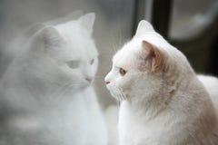 De witte bezinning van de kattenspiegel Stock Afbeeldingen