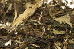 De witte bladeren van theepai mu tan Stock Foto's