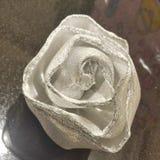 De witte bloem royalty-vrije stock foto