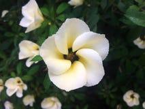 De witte bloem is somber Stock Afbeelding