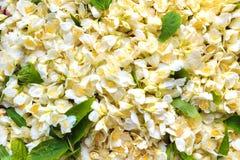 De witte Bloem van de Jasmijn Royalty-vrije Stock Afbeelding