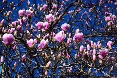De witte bloemen op de boom zeggen over de komende lente stock foto's