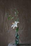 De witte bloemen van de leliew. langzaam verdwenen weide royalty-vrije stock fotografie