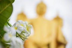 de witte bloemen van Plumeria of Frangipani- bloesem met het standbeeld van Boedha Royalty-vrije Stock Afbeeldingen
