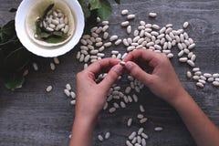 De witte bonen en de vrouwelijke handen symboliseren het gezonde eten Royalty-vrije Stock Afbeeldingen
