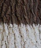 De witte en bruine textuur van de boomschors Royalty-vrije Stock Foto's