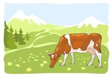 De witte en rode koe is geweid op een weide. Stock Fotografie