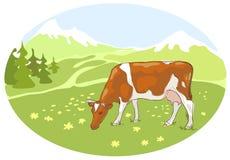 De witte en rode koe is geweid op een weide. Stock Afbeelding