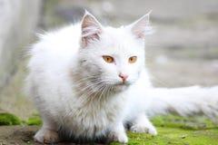 De witte enige dakloze kat met oranje ogen stelt in openlucht op een zonnige dag royalty-vrije stock afbeelding