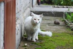 De witte enige dakloze kat met oranje ogen stelt in openlucht op een zonnige dag royalty-vrije stock foto's
