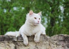 De witte enige dakloze kat met oranje ogen stelt in openlucht op een zonnige dag stock fotografie