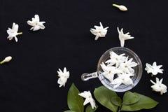 De witte flora van de bloemenjasmijn lokaal van de vlotter van Azië op water royalty-vrije stock foto