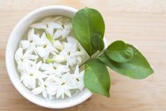 De witte flora van de bloemenjasmijn lokaal van de vlotter van Azië op water stock afbeeldingen