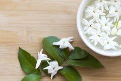 De witte flora van de bloemenjasmijn lokaal van de vlotter van Azië op water stock foto's
