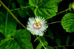 De witte fotografie van het bloemclose-up Royalty-vrije Stock Foto