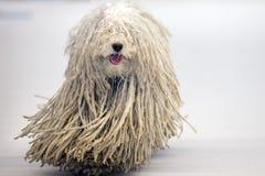 Van een hond Rasta stock afbeelding. Afbeelding bestaande uit humoristisch - 14235839