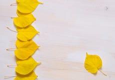 De witte houten achtergrond met aardige geel doorbladert Stock Afbeeldingen