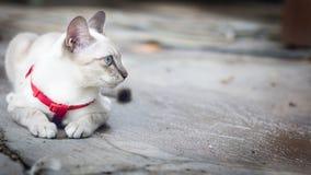 De witte kat die op de vloer hurken en ziet buiten eruit stock afbeeldingen