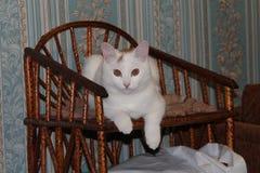 De witte kat kijkt op de camera stock foto's
