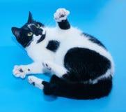 De witte kat met zwarte vlekken ligt uitgestrekte poten stock foto's