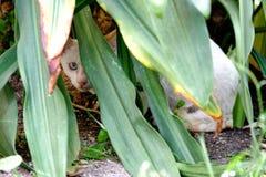 De witte kat probeert om achter het installatie` s lange blad te verbergen stock fotografie