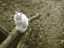 De witte kat zit Royalty-vrije Stock Foto's