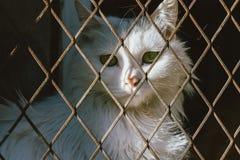 De witte kattenval en is geplakt royalty-vrije stock foto