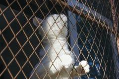De witte kattenval en is geplakt in staaldraad het opleveren, kooi, het hopen royalty-vrije stock foto
