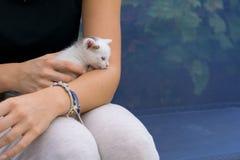 De witte knuffel van de babykat met vrouwelijke eigenaar royalty-vrije stock afbeeldingen
