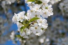 De witte lente royalty-vrije stock foto