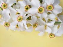 De witte lente bloeit achtergrond, of de zomer royalty-vrije stock fotografie