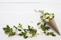 De witte lokale flora van de bloemenjasmijn van Azië op wit stock foto
