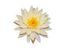 De witte lotusbloem isoleert Royalty-vrije Stock Foto